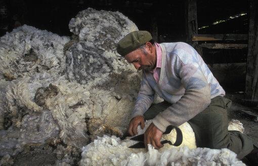 shearing, Patagonia, Argentina - 00213HS