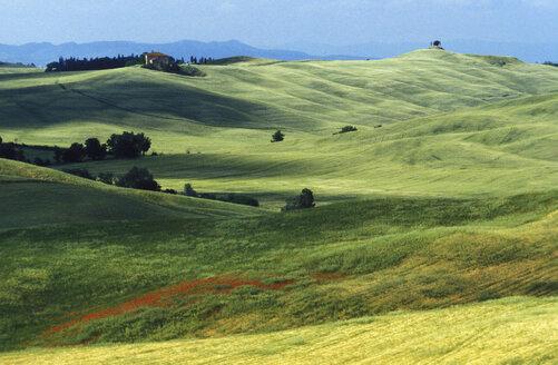 Italy, Tuscany - 00164GS