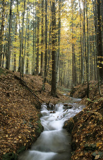 Germany, Bavarian forest, near Buchenau - HSF00918