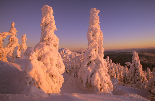 Germany, Bavarian forest, Large Arber - HSF00909
