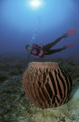 Scuba diver and coral - GN00559