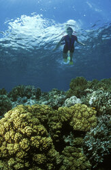 Diver over corals - GN00542