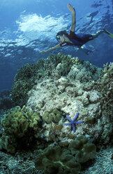 Snorkler over corals - GN00538