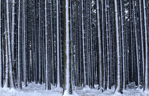 Germany, Bavaria, view of forest covered in snow - EK00331
