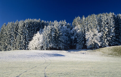 Germany, Bavaria, snow-covered trees in forest - EK00326