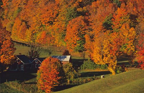 USA; Vermont; Green Mountains; Jenny Farm - HS00862
