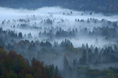 Forest in mist, Füssen, Bavaria, Germany, elevated view - EKF00573