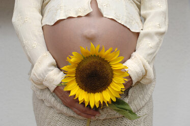 Pregnant mother with sunflower, midsection - CRF00789