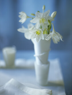 Eucharis in vase - HOEF00020