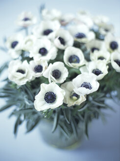 Anemones, close-up - HOEF00003