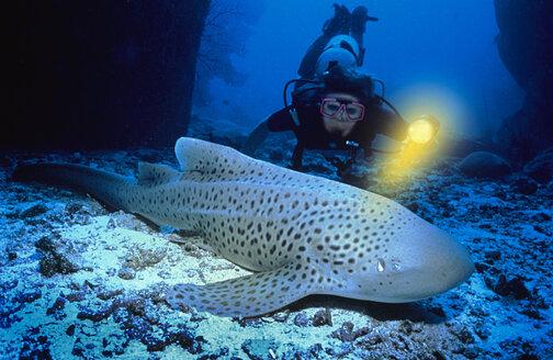 Diver watching fish - MB00182