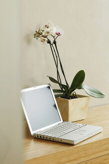 Orchid plant and laptop on table - BMF00250