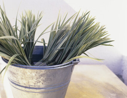Bunches of sedge grass in tin bucket, close-up - HOEF00236