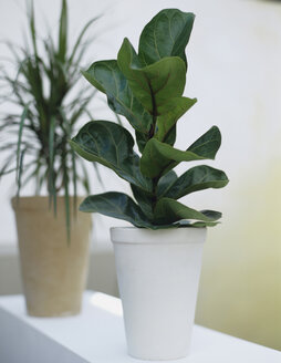 Pot plants - HOEF00174
