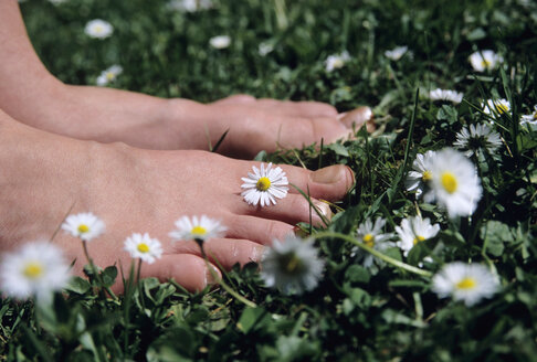 Feet on grass with daisy flowers, close-up - WESTF01140