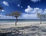 Italy, Apulia, beach with tree - MOF00084