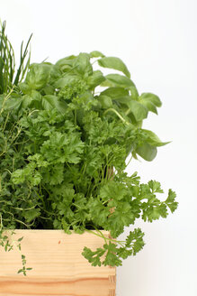 Herb plants in wood pot, close-up - WESTF01353