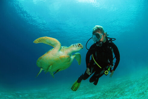 Philippines, scuba diver with green turle, underwater view - GNF00798