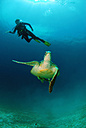 Philippines, scuba diver with green turle - GNF00795