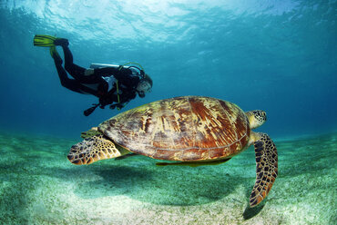 Philippines, scuba diver with green turle, underwater view - GNF00770