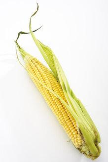 Fresh corncob - 04576CS-U