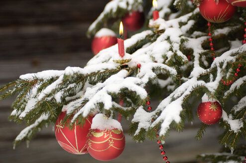 Christmas tree covered with snow, close-up - HHF00517
