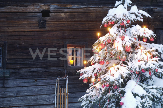 Christmas tree covered with snow, close-up - HHF00514