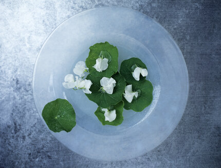 Nasturtium leaves and blossoms on plate, elevated view - HOEF00212