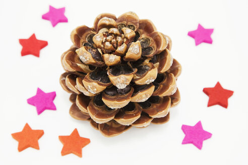 Fir cone and star-anise - GWF00318