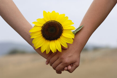 Holding hands with sunflower - CRF00951