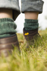 Person walking in meadow, low section, focus on flower, close-up - BABF00009