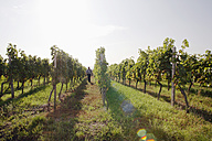 Man walking in vineyard - WESTF03810