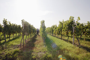 Man walking in vineyard - WESTF03810