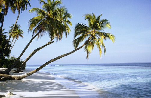 Maldive Islands, coconut palms on beach - GNF00848