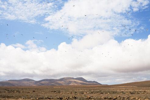Spain, Fuerteventura - UKF00129