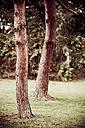 Trees in meadow - DW00036