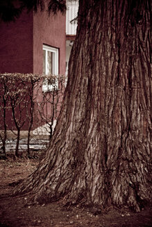 Tree in front of building, close-up - DW00011