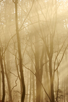 Trees in twilight - SMF00058