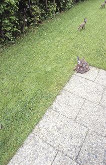 Deer figures on lawn in the garden - PM00476