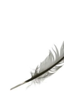 Feather, close-up - TL00015