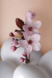 Easter eggs with cherry blossoms, close-up - 00280LR-U