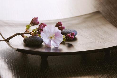 Cherry Blossom Close-up - ASF03293