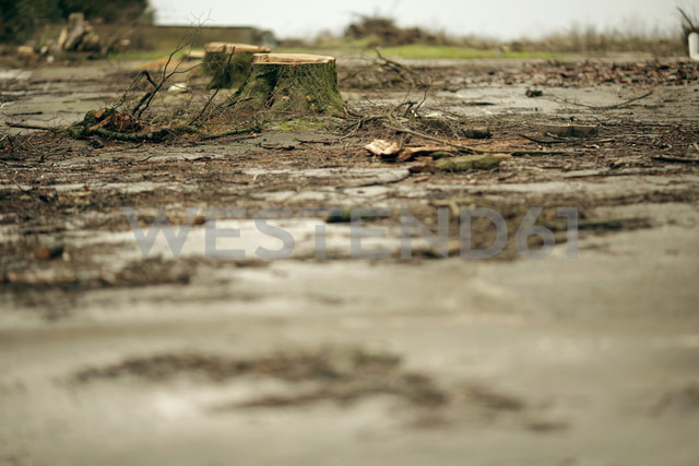 Felled trees and puddles - MF00315 - Mareen Fischinger/Westend61