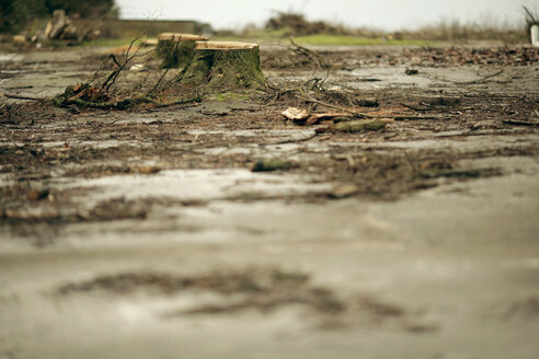 Felled trees and puddles - MF00315