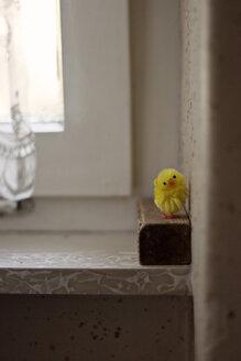 Soft chick on windowsill, close-up - DW00139