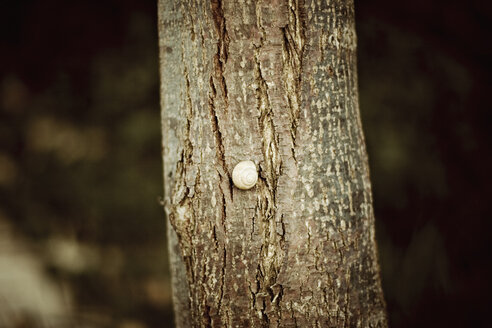 A snail on a tree trunk, close-up - DW00124