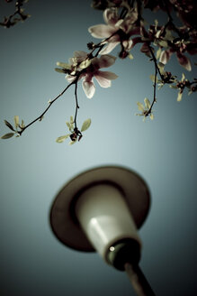 Blossoming Tree and street lamp, close-up - DW00094