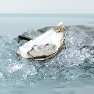 Open oyster on ice,  close-up - CHK00566