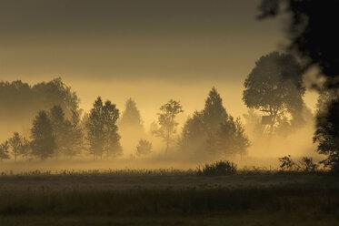 Germany, Landscape in mist - EKF00917