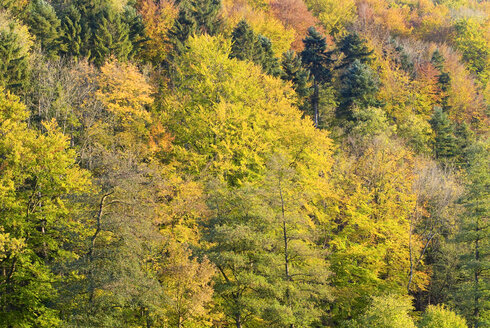 Germany Black forest, Autumn colours - SHF00198